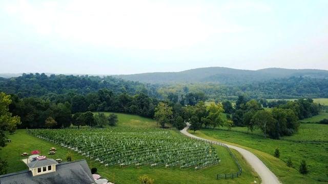 50 West Vineyards Northern Virginia